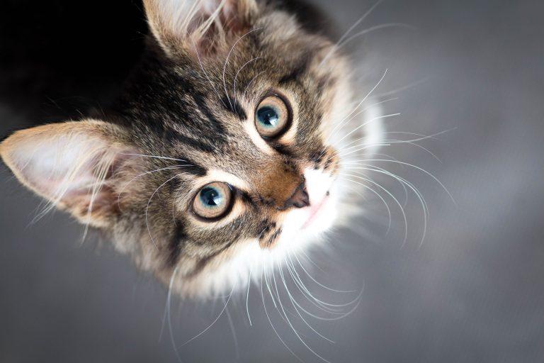 cat-services-blog