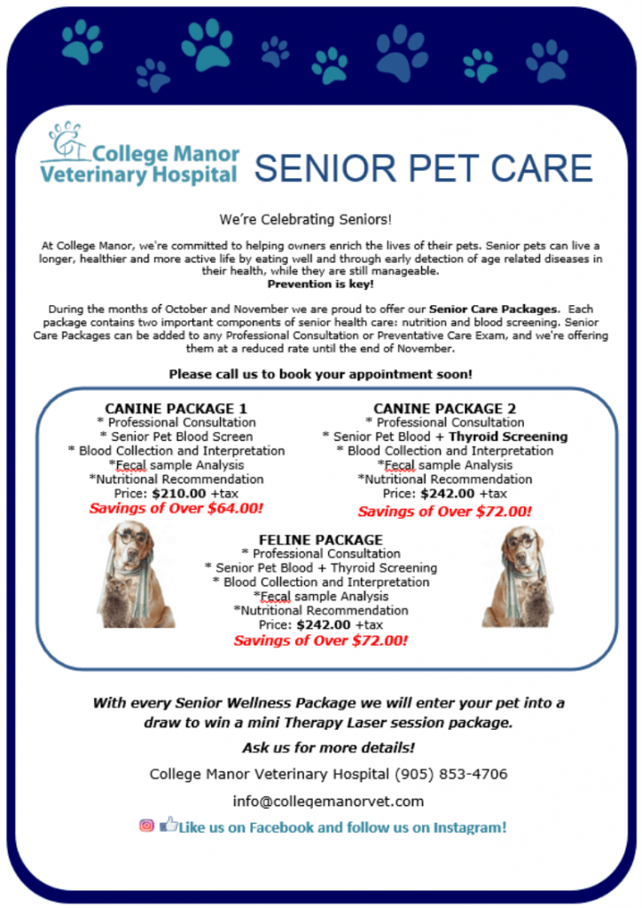 Senior Pet Focus