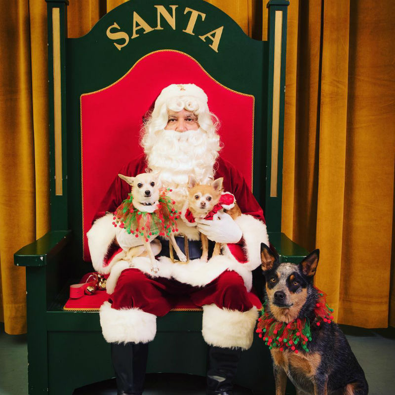 Safety Tips for Your Pets During the Holidays