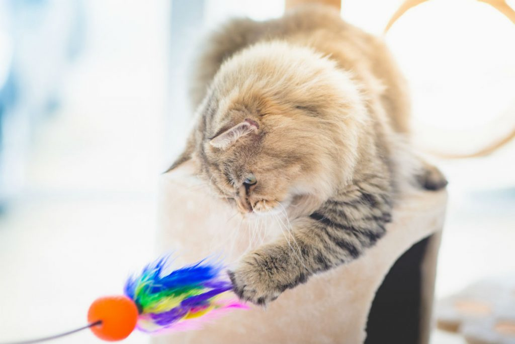 Cat playing with a cat toy