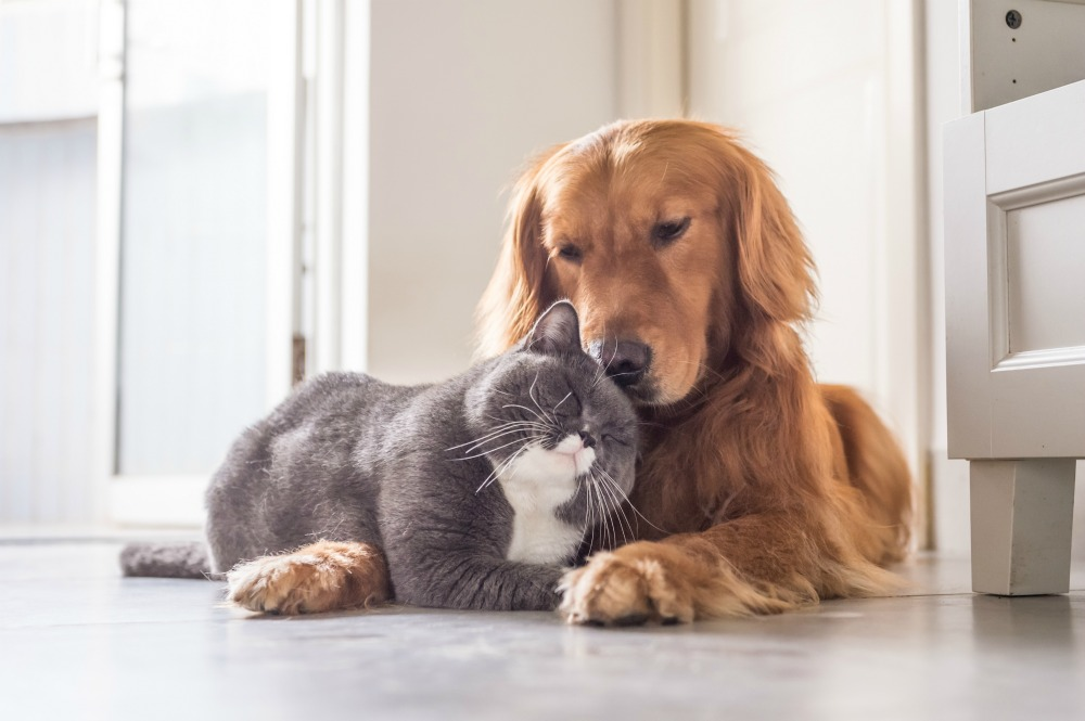 A cat and dog lying down and snuggling up to each other