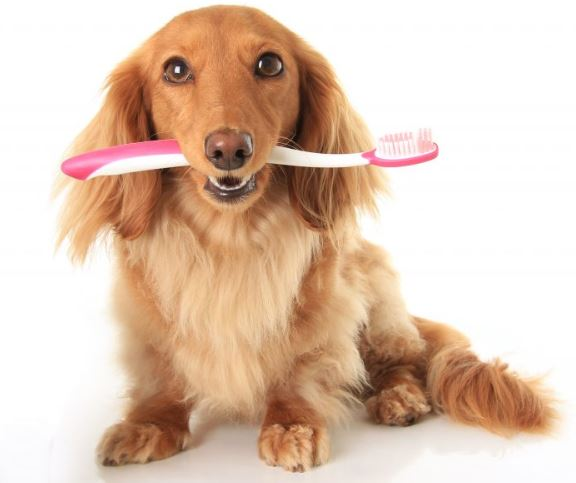 A sitting dog with a pink toothbrush in its mouth