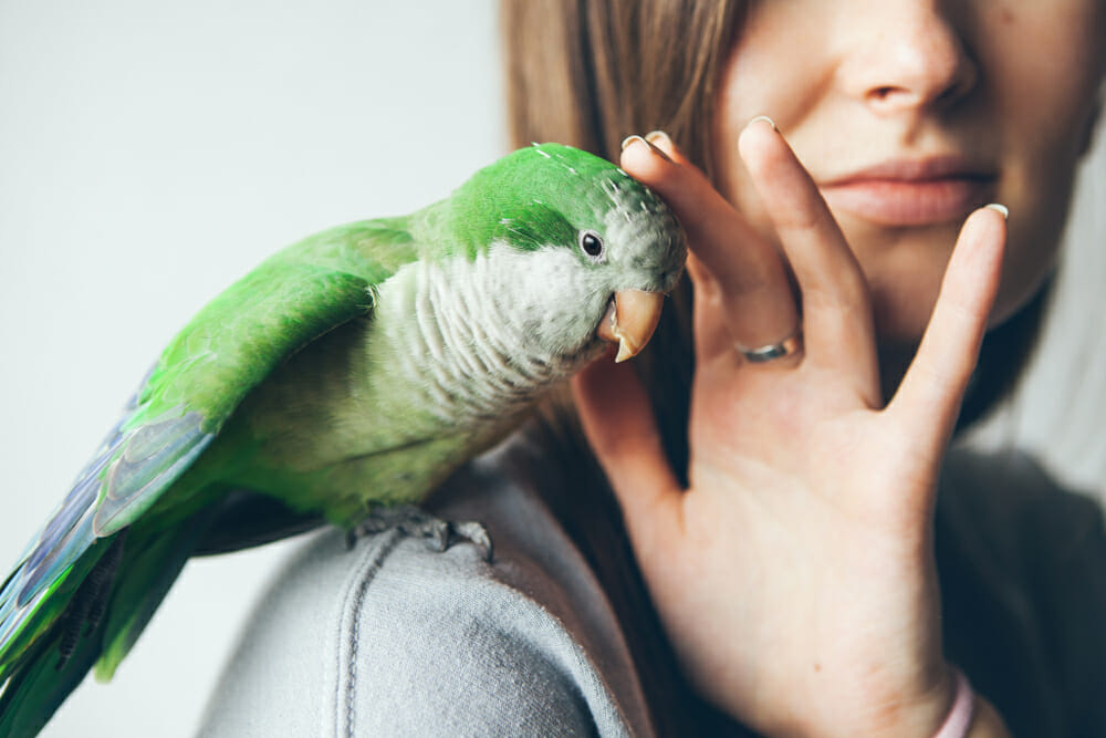 Woman petting a green bird on her shoulder